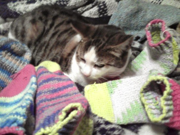 Black-tabby-on-white cat nestled among multi-colored, crocheted socks