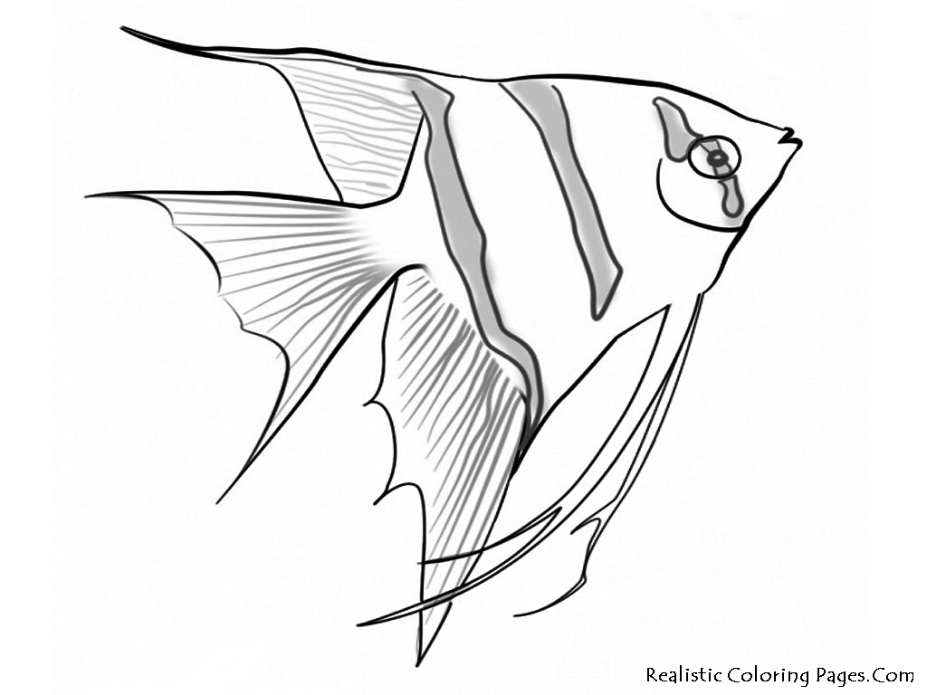 free coloring pages of sea life