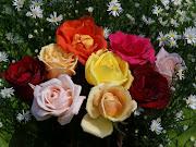 . una característica que no poseen las rosas de origen oriental. vigne