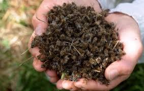 سلسلة أمراض وآفات النحل