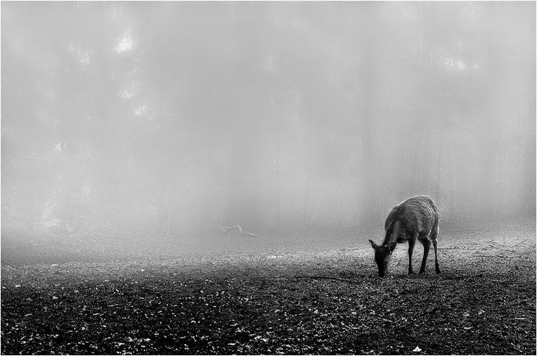 Compact Camera, Best Photo of the Day in Emphoka by Ralph Kellenberger, Leica X2, https://flic.kr/p/gC3GJk