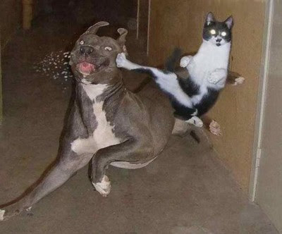 cat_kicks_dog_12362_Funny_cats_and_dogs_pics-s400x332-49222.jpg