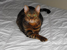 My Toyger,The Cinnamon Prim