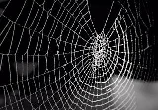 Las arañas comen su tela de araña