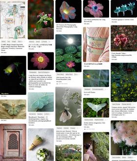 ✦ Pinterest : Violette Sumire