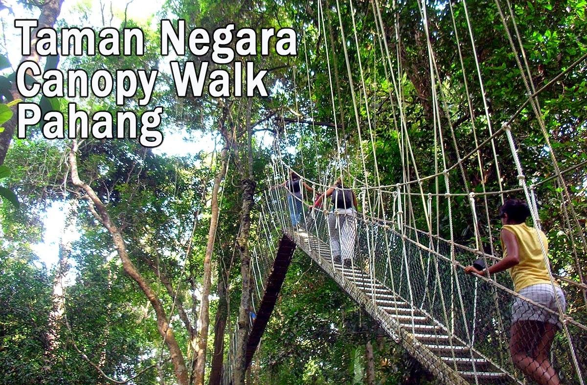 Taman Negara Canopy Walk in Pahang