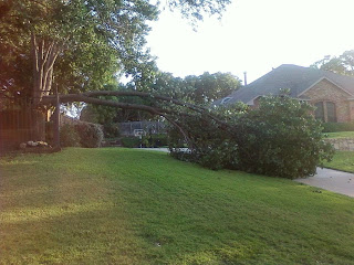 fallen tree, broken tree