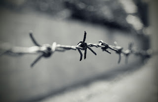 Closeup photo of barbed wire.