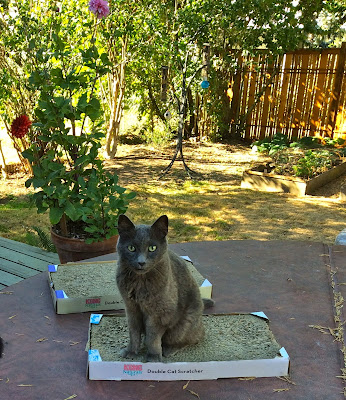 cat outside cardboard scratching posts