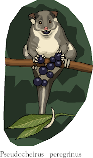 Common Ringtail Possum | Pseudocheirus Peregrinus Free Animal Clipart