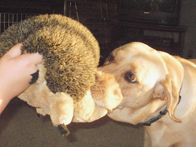 Kyjen, Harley the Squeaking Hedgehog, Rex Reviews Dog Products