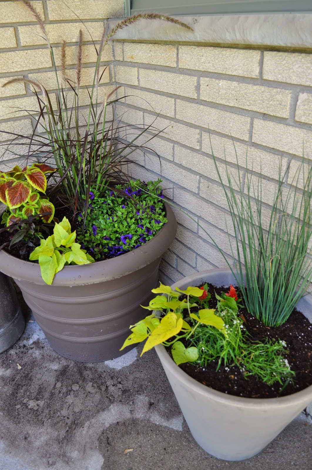 plants, sprucing up, front entry, new house, outside, painting, paint, potato vines, grasses, coleus