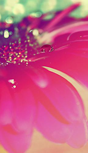 Corazones con Brillos | Imagenes de Amor, Amistad, Tierna