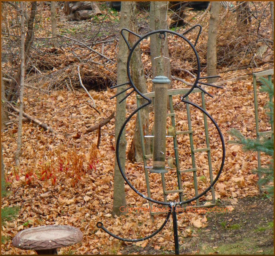 hungry finches in cat feeder autumns fallen leaves mess photo image