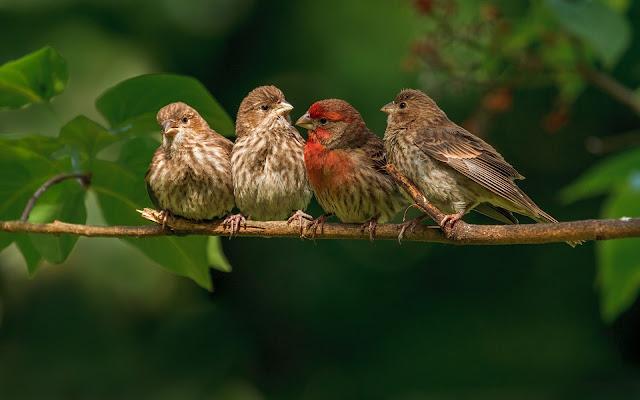 Fotografia de Familia de Aves Pequeña Imagenes de Aves Exoticas