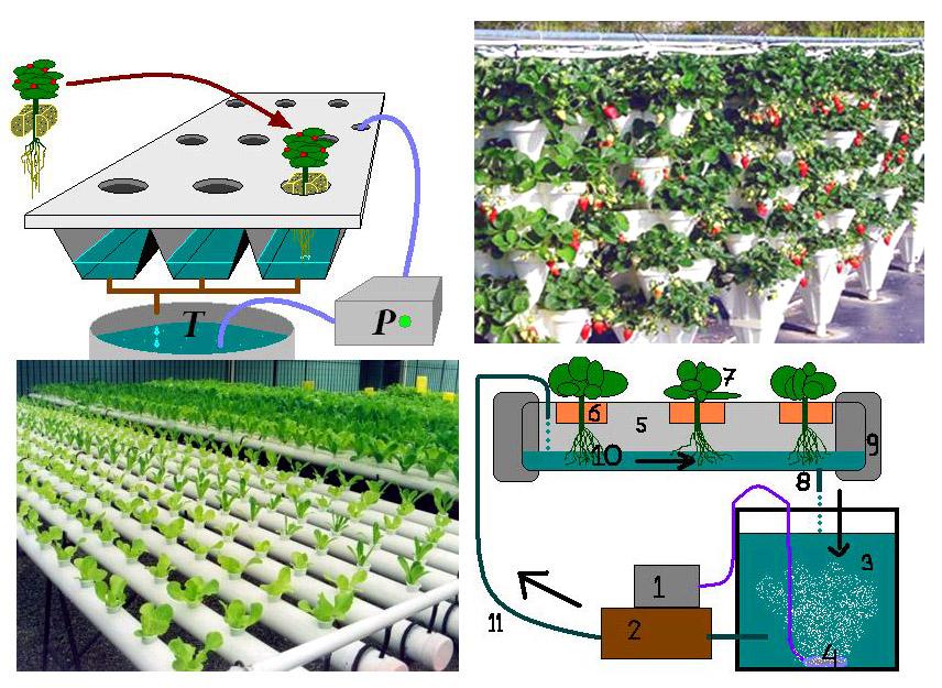 Cambiamo la nostra energia nel meglio idrocoltura for Terreni piantati a meli