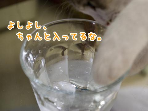 氷で遊ぶ子猫
