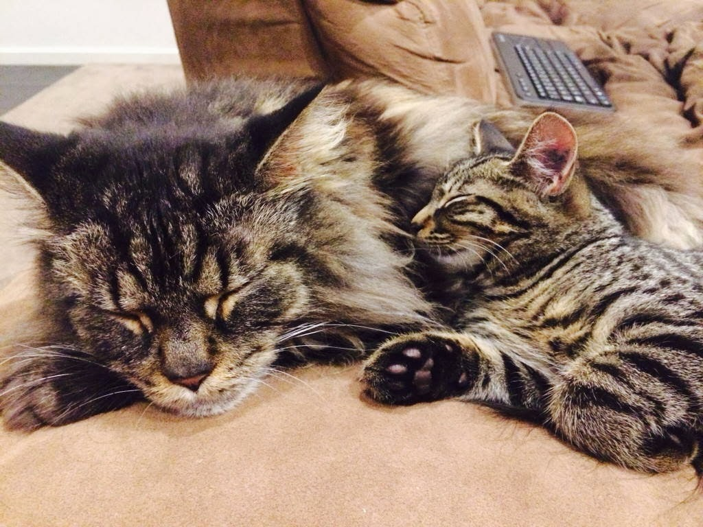 Funny cats - part 93 (40 pics + 10 gifs), cat and kitten cuddling