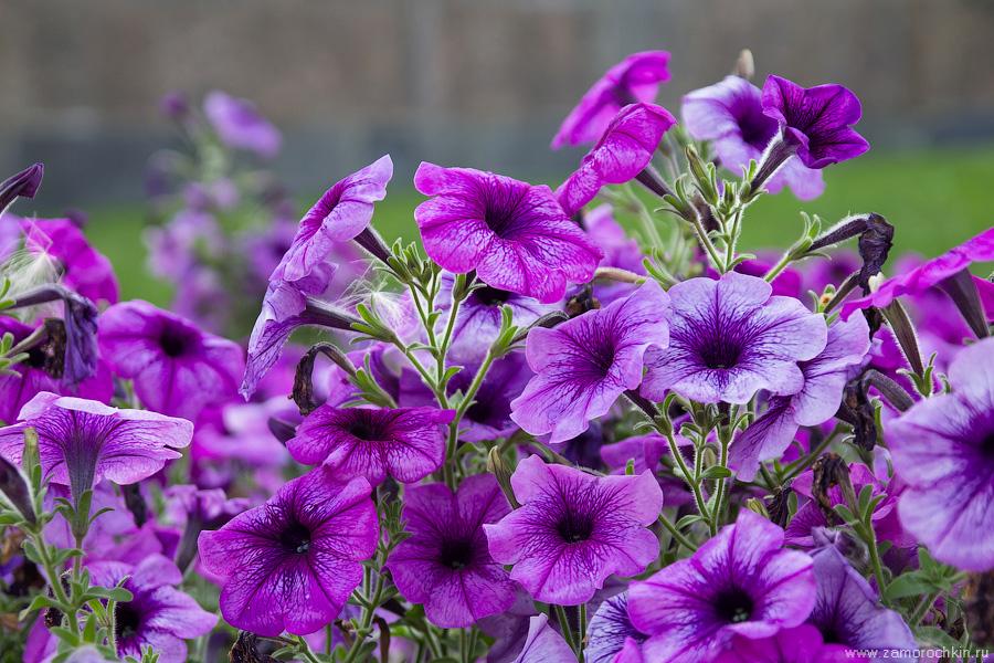 Городские цветы | Flowers in the city