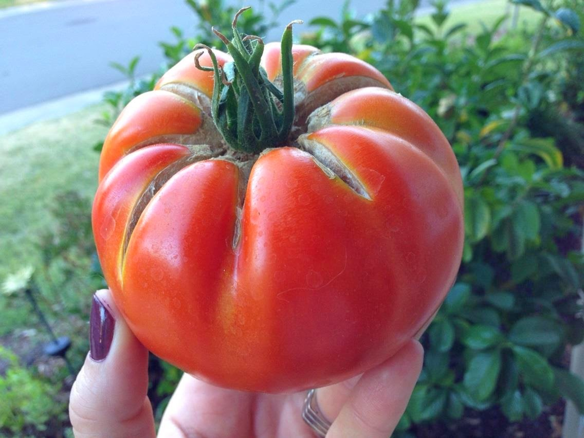 #100HappyDays: The $10,000 tomato