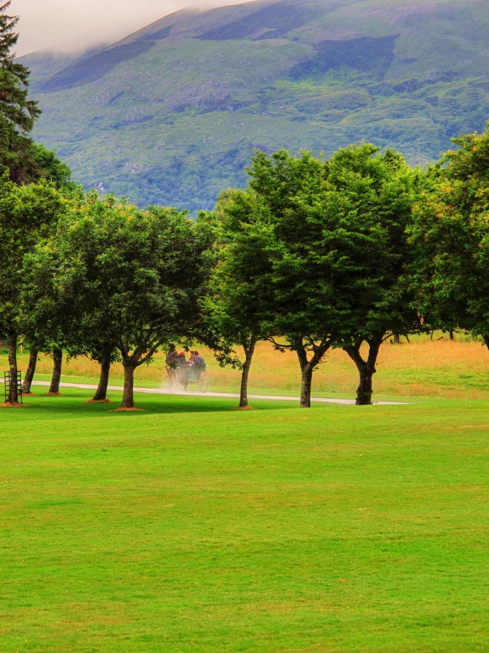 horse and trap in landscape, muckross house, killarney, ireland photo by susan wellington