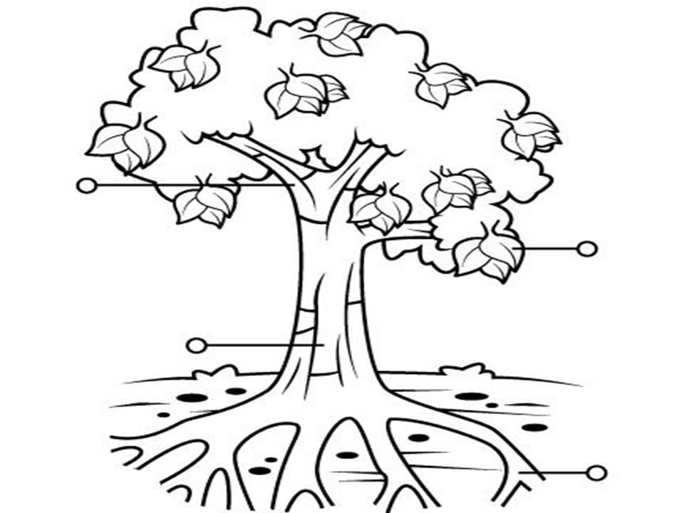 Dibujos para colorear de las plantas y sus partes - Imagui