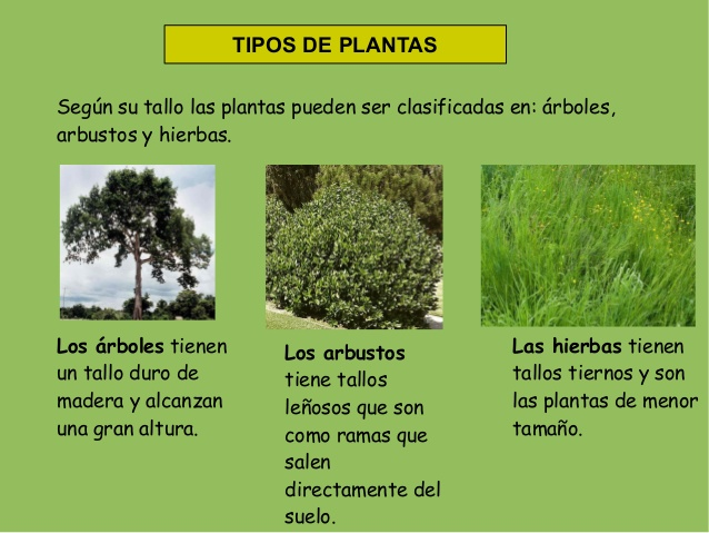 Planetaprende - Arbustos nombres ...