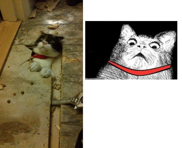 funny cat pictures, cat looks loke meme