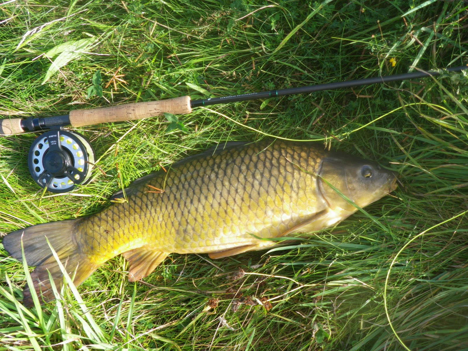 Fly fishing and other adventures thenford lakes carp on for Fly fishing carp