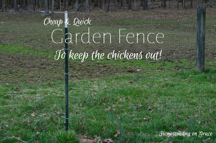 Inexpensive Garden Fence | Homesteading on Grace