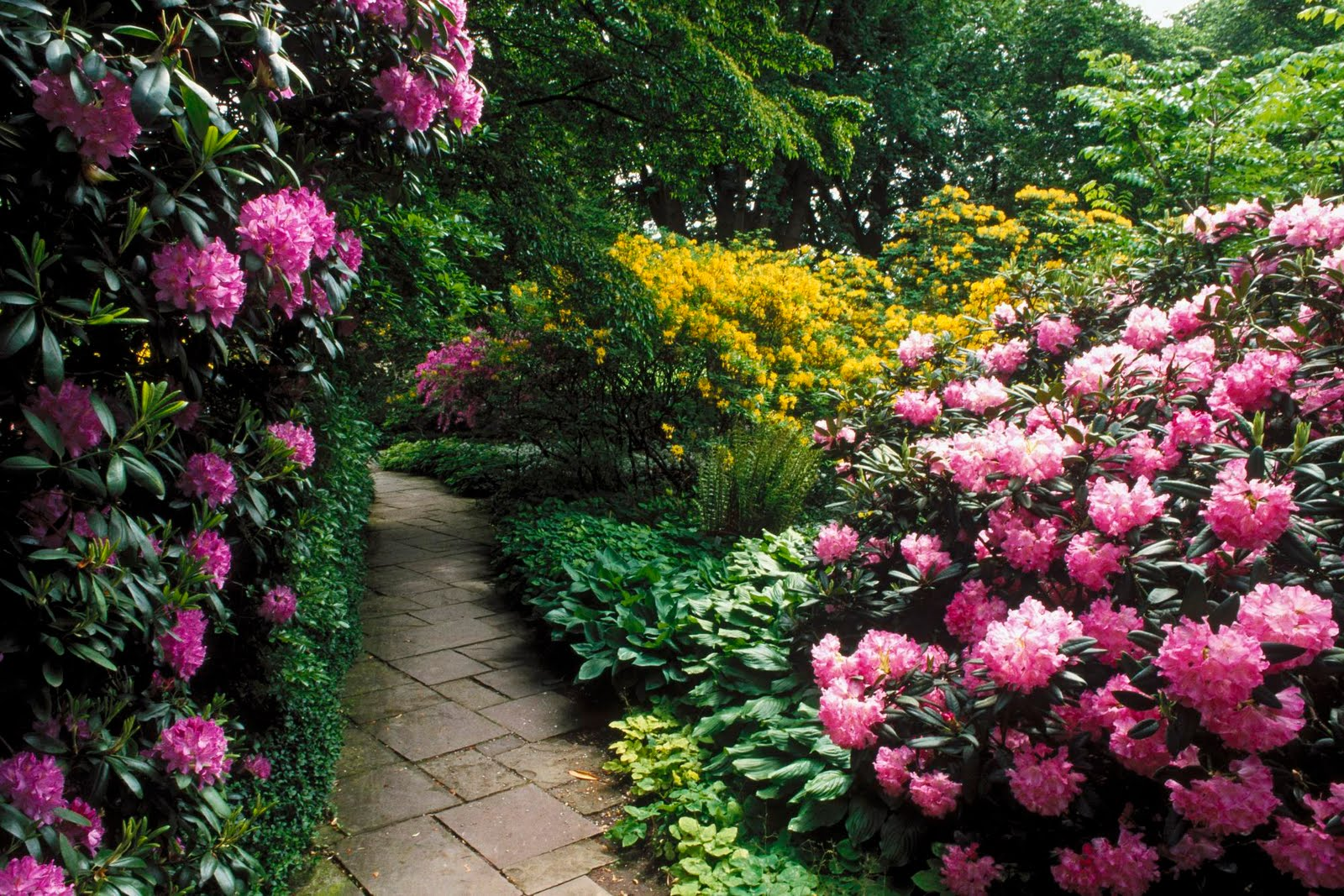 Beautiful flower garden flower forest cool wallpapers for Beautiful flower landscapes
