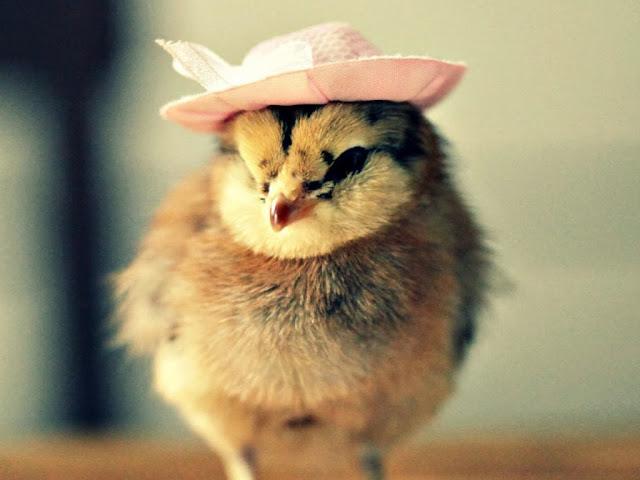 """<img src=""""http://4.bp.blogspot.com/-MGS9C3k0H2Q/Uq28FP8n1oI/AAAAAAAAFgs/QgXqWQIRjR0/s1600/985.jpg"""" alt=""""Birds wallpapers"""" />"""