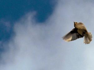 Burung Sanggup Terbang Tembus Topan Badai