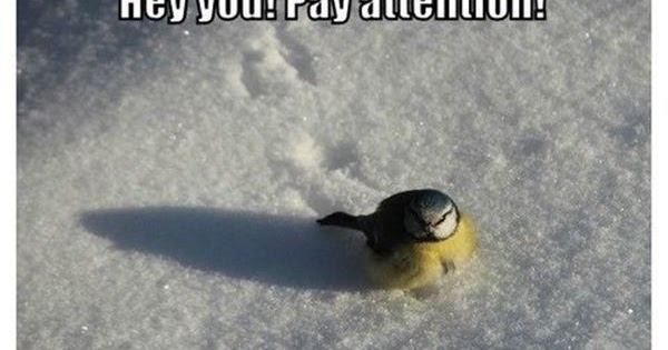 Funny Memes For Winter : Amazing creatures: 30 funny animal captions part 12 30 pics