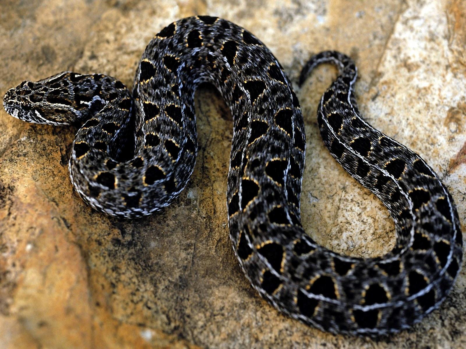 snake - photo #35