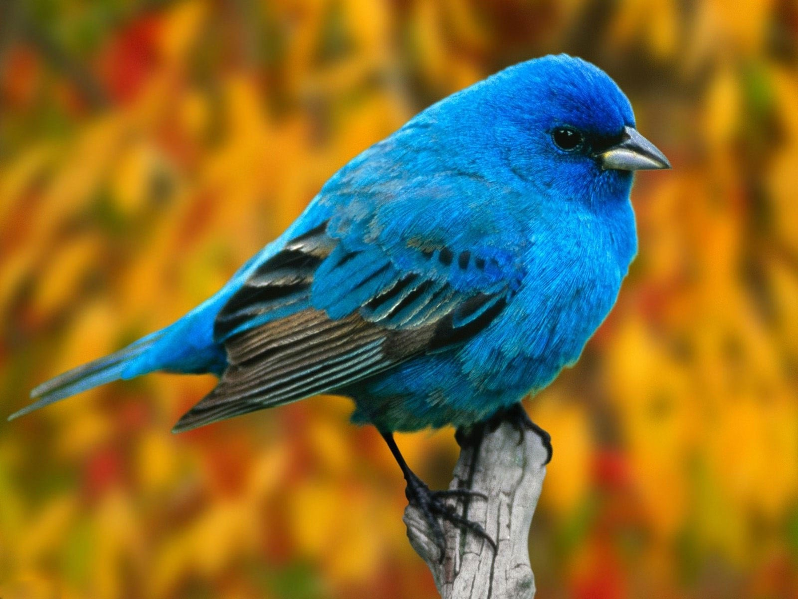 animals wallpapers | birds wallpapers | hd desktop backgrounds