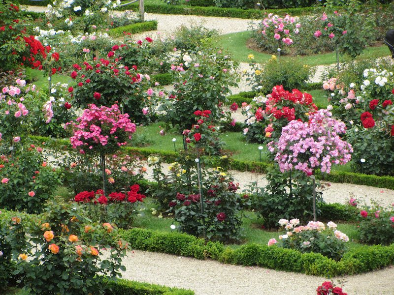 The Most Beautiful Rose Garden In The World