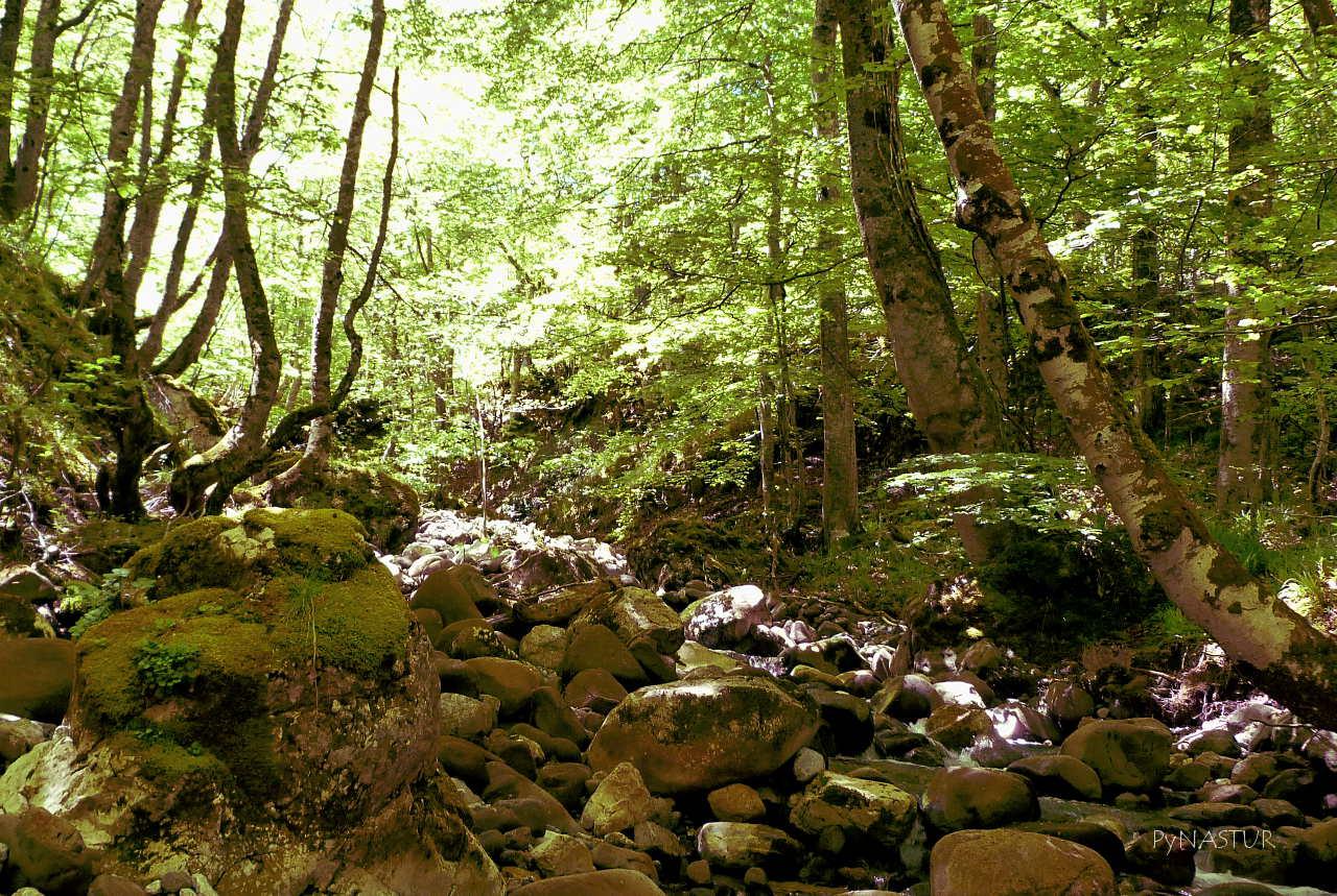 Cauce del Arroyo de la Foz Grande - Quirós - Asturias