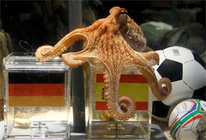 bạch tuộc paul