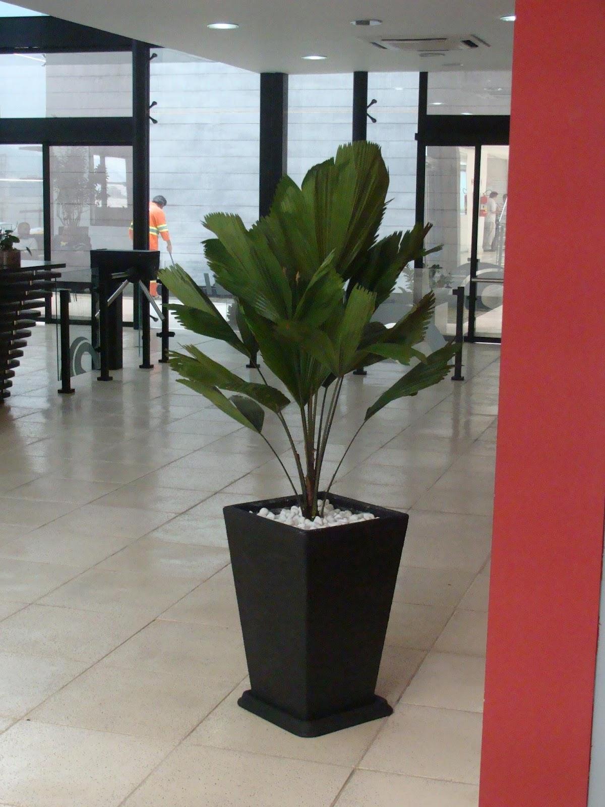 Ch cara flora rohn plantas ornamentais paisagismo - Plantas grandes para interiores ...