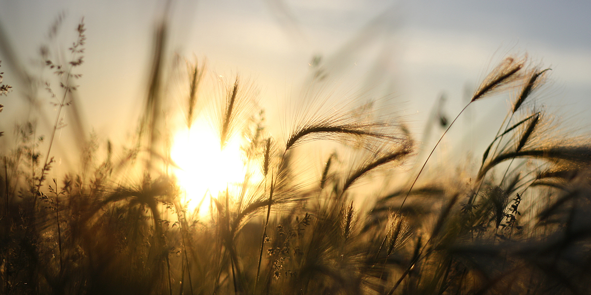 Sunrise Nature l 300+ Muhteşem HD Twitter Kapak Fotoğrafları