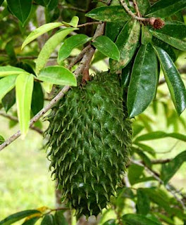 Soursop Leaf Nutritions