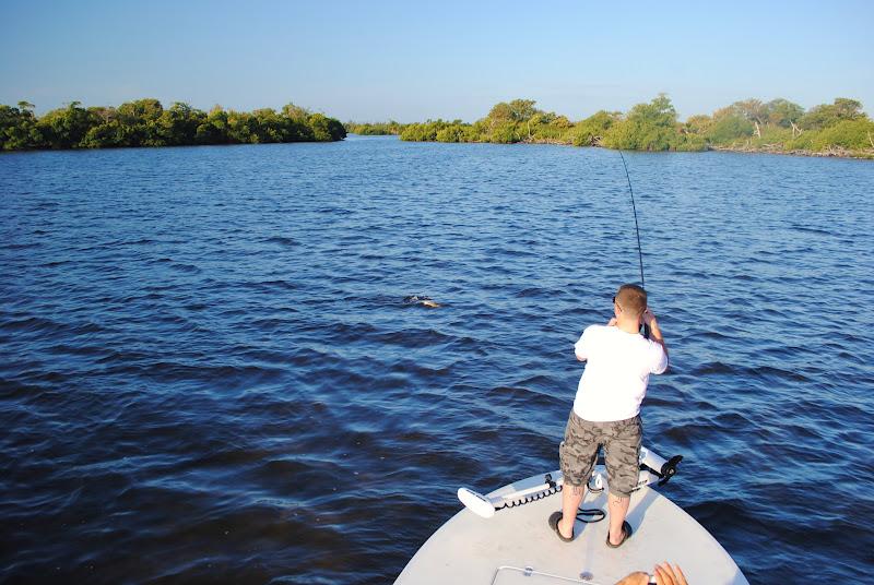 The pine island angler matlacha fishing report lots of for Pine island fishing charters
