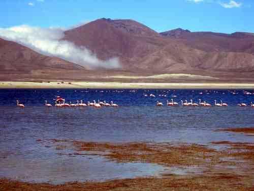 La existencia de las lagunas de Tajzara en Tarija amenazadas por la sequía