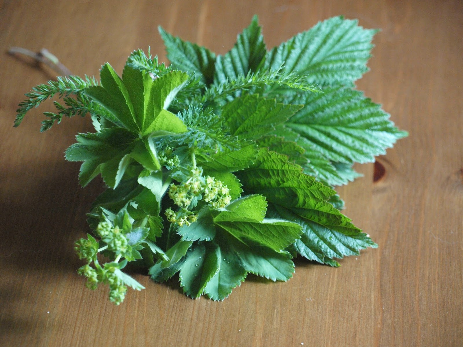 Canine herbal therapy - Luckily In Our Kennel We Have Been Using These Herbs For Preventive Measures But There Are So Many More Health Benefits And Reasons Why This Herbal Mix