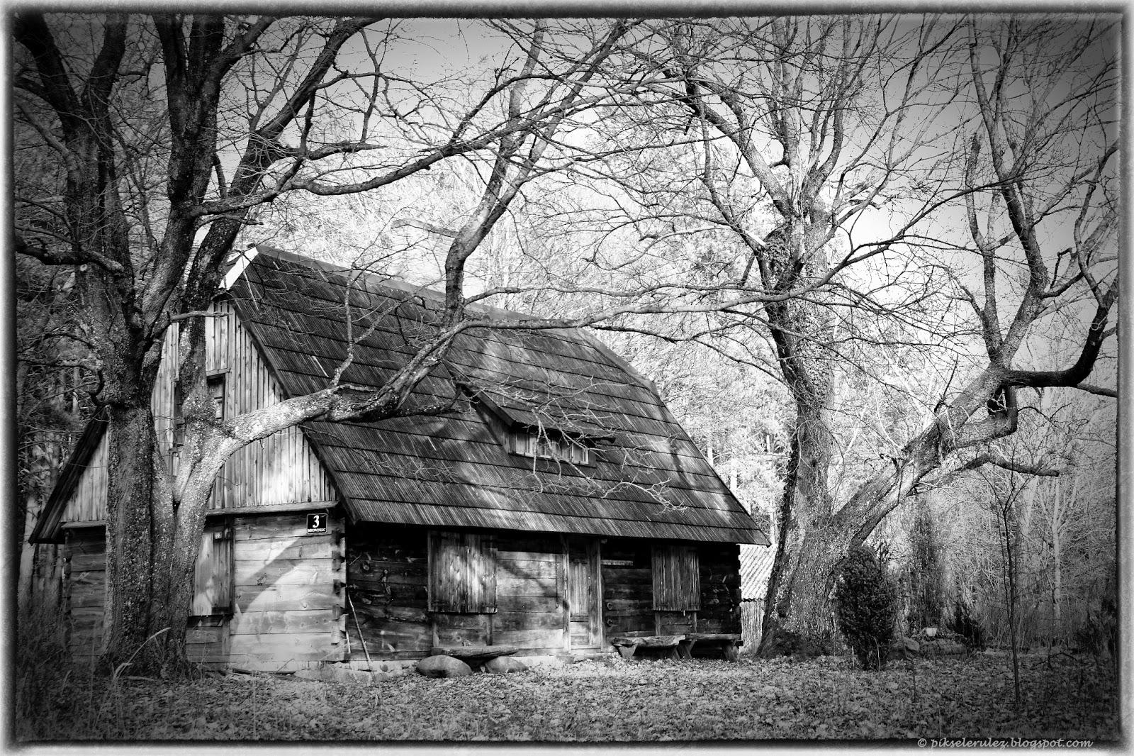 chatka, bory tucholskie, drzewa, drewniana chata