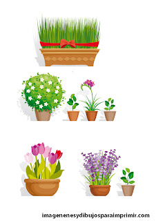 flowerpots with daisies or tulips