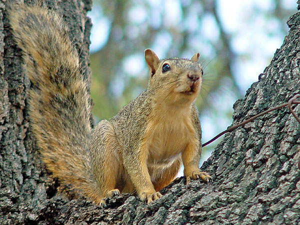 General Types of Squirrels