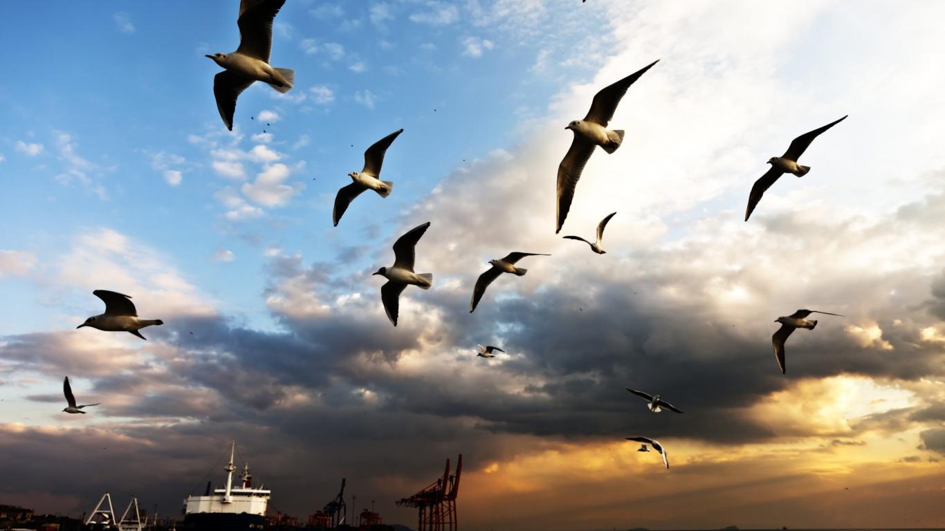 http://4.bp.blogspot.com/-MJtkJBtc990/T-g10PBB4bI/AAAAAAAABk8/P8n6wtBoiY0/s1600/nature+wallpaper-seagull+(8).jpg