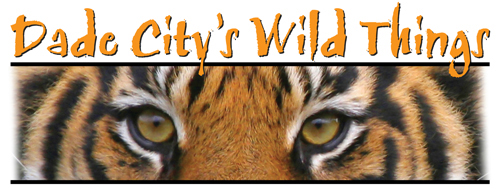 Dade City Wild Things Zoo